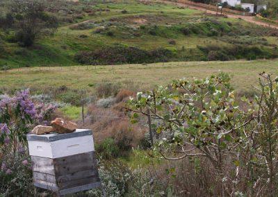 Waterleliefontein Farm Van der Stell Pass Botriver
